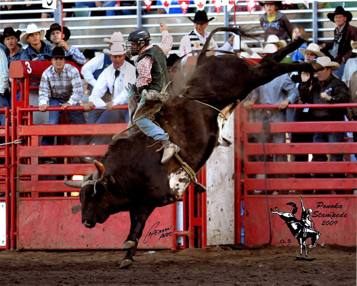 Rodeo Bucking Bulls http://outlawbuckers.com/bucking_bulls.html
