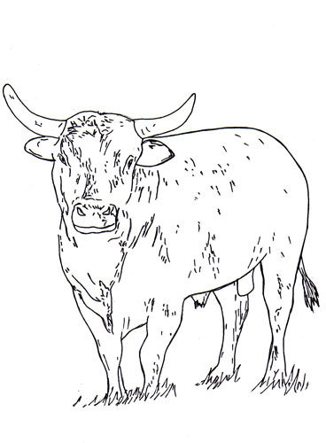 bucking bull coloring pages just 4 kids outlaw buckers rodeo corp